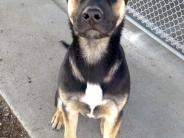 Photo of Royce dog