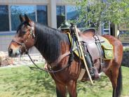 "Mounted Patrol Horse ""Bigun"""
